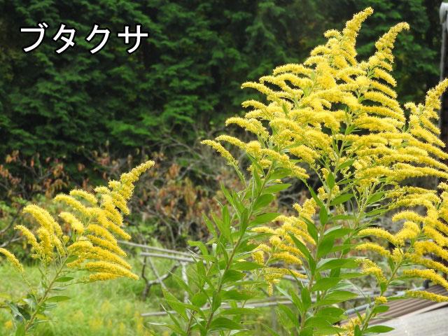 14. 夏から秋にかけての花粉症について